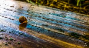 Snail-Minmum-Gift